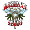Haze Man Seeds