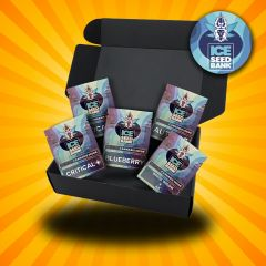 The ICE Seeds Collectors Gift Box