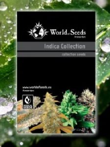 World of Seeds - Indica Landraces Collection Seeds - 20