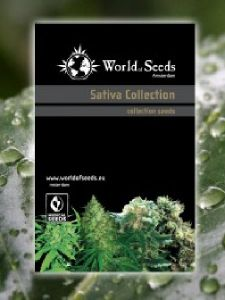 World of Seeds - Sativa Landraces Collection Seeds - 20