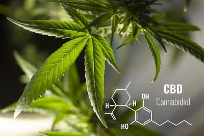 12 Important CBD Facts Every Beginner Should Know